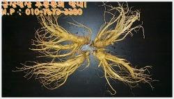 금산인삼도매시장 인삼 판매! 뛰어난 품질의 금산인삼 만나보셔서 건강하게 즐겨보세요^^