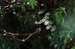 석장포(꽃장포)와 만나다