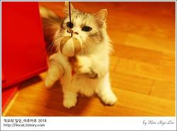 [적묘의 고양이]같은 장난감,다른 반응,소유권이전,월간낚시 파닥파닥