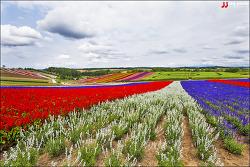 일본 홋카이도 비에이 드 넓은 언덕을 가득 메운 꽃들의 향연...시키사이노오카공원 / 四季彩の丘公園
