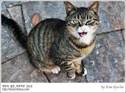 [적묘의 고양이]부산대 담벼락 고양이,공전고양이,쓰레기버리지 말아요
