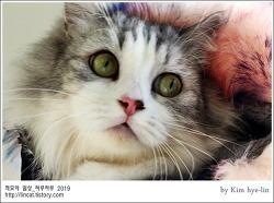[적묘의 고양이]친구님네 먼치킨,럭셔리한 짤뱅군의 변신, 설빔,패션을 아는 고양이