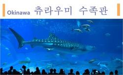 오키나와여행의 하일라이트 츄라우미 수족관에서 본 고래상어 (추라우미수족관 입장료, 먹이주는시간)