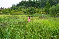 서울시 최초의 시립 수목원 서울 구로 항동 푸른 수목원 - 서울 가볼만한 곳