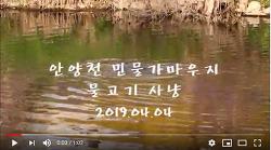 [영상]안양천 민물가마우지의 물고기 사냥(2019.04.04)