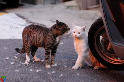 고양이, 아현동과 이대