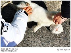 [적묘의 고양이]부산대고양이,담벼락의 흰둥이는 어디로 갔을까,영역싸움,근황궁금