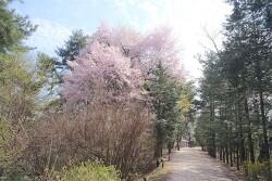 홍릉수목원 숲길