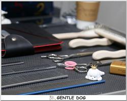 [인천 청라 가위컷 전문 젠틀독] 비숑셀프미용은 젠틀독에서 교육하고 있습니다.