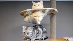 새로운 고양이 자동 장난감에 꼭 필요한 것