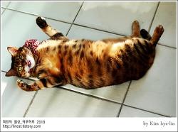 [적묘의 고양이]친구님네 뱅갈,먼치킨,임보 업둥이 루이비통,고양이 마약,뽕파티현장급습