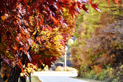 가을로 떠나는 여행