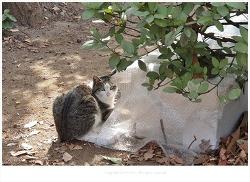 우리동네 공원에 사는 길고양이들의 겨울나기...