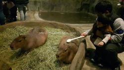 하남 실내동물원 주렁주렁 리얼방문후기^^
