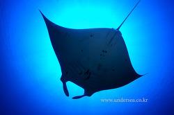 Dive Komodo with Seasafari 7, Indonesia