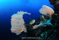 Coral of Raja Ampat 2, Indonesia