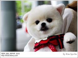 [적묘의 벡스코]케이펫페어에서 만난 강아지, 고양이,벡스코 신관,4월 28일