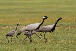 동아시아 철새 루트 탐방 : 몽골 8박10일