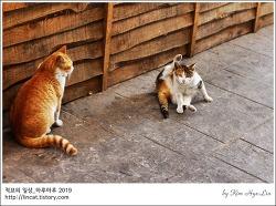 [적묘의 고양이]경성대부경대역 근처 골목길에서 만난 고양이들