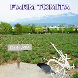 보라빛향기 북해도 라벤더밭의 대명사 | 나카후라노 팜토미타