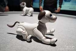 소니가 CES2019에서 발표한 것 중 가장 관심있게 본 것은 반려견 같은 로봇 강아지 아이보과 플레이스테이션
