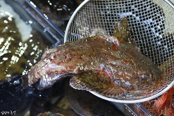 어한기인 3월에 먹으면 좋은 제철 생선회