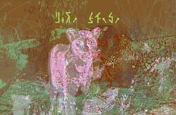 [사진편집] 흑표범 (Black Leopard, 100년 만에 촬영되었다고 함)
