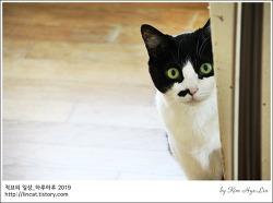 [적묘의 고양이]15살 묘르신,할묘니,깜찍양의 정원 나들이,그리고 팻로스