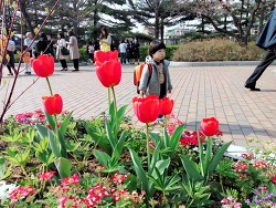 2018년 4월 서울 어린이대공원, 아차산역, 꽃구경