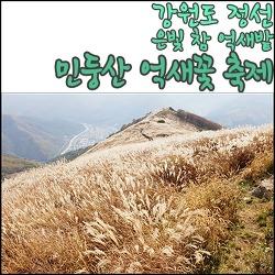 강원도 정선군, 참억새 군락지 민둥산 억새꽃 축제