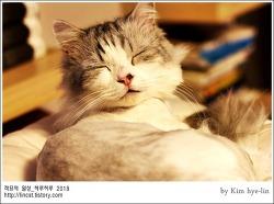 [적묘의 고양이]친구님네 먼치킨,짤뱅이,불면증이 뭐예요?,수면장애는 없다