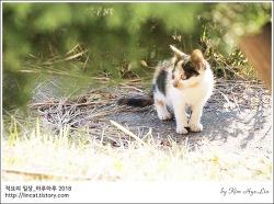 [적묘의 고양이]카오스,아기고양이,점프점프,11월의 시작