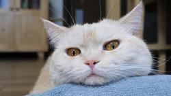 펫밀크를 본 고양이들의 반응