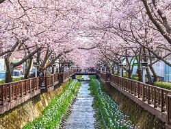 봄 시즌엔 <벚꽃엔딩>보다 벚꽃 한정판 마케팅이 대세?