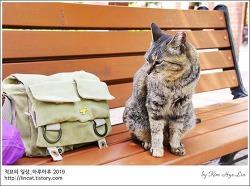 [적묘의 고양이]부산대,사회관, 등나무 꽃아래,고양이가 여름마냥, 느른하게 다가온다