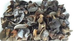 중국집에서 볼 수 있는 목이버섯입니다~