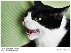 [적묘의 고양이]하악하악,입금전후,까칠한 고양이,깜찍 할묘니가 하악하는 이유