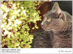 [적묘의 고양이]푸른정원의 고양이,묘르신,할묘니,13살 몽실양