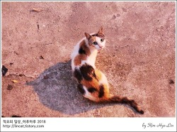 [적묘의 고양이]주차장 고양이,캣맘,맘이 그런 맘, 도시생태계