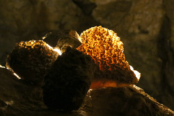 쥬얼케이브(Jewel Cave) 내셔널모뉴먼트에서 꼭 해야하는 대표 동굴투어인 시닉투어(Scenic Tour)