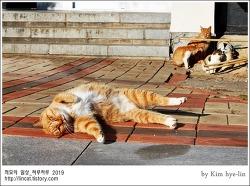 [적묘의 고양이]부산대 고양이가족,발라당,딩굴딩굴,노랑둥이들,비타민 D,햇살바라기