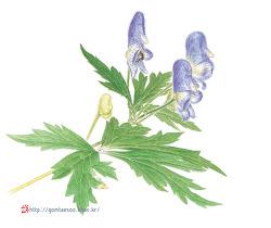투구꽃과 꽃무릇