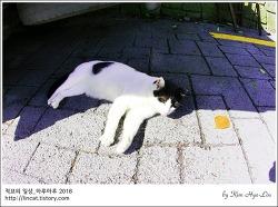 [적묘의 고양이]감천문화마을 고양이들, 딩굴딩굴,접대묘,영업묘?