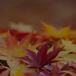 가을 여행은 어디로? 가을에 즐기는 전국 이색 축제 5
