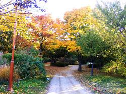 [가을 가볼만한 곳] 상암 월드컵 공원 단풍 구경. 산책하기 좋은 곳!