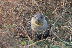 수달 [Otter]