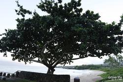 몰로키니스노쿨링! 하와이 마우이에서 만나는 초승달섬에서 카이카나니배를 타고 즐겼지요