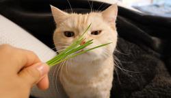 고양이 새집 적응기 2탄(캣그라스)