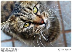 [적묘의 고양이]부산대 공실이,베라스푼 재활용방법,공동실습관 장모냥,캠퍼스고양이