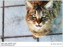[적묘의 고양이]부산대 공실이,들락날락,공동실습관 장모냥,캠퍼스고양이